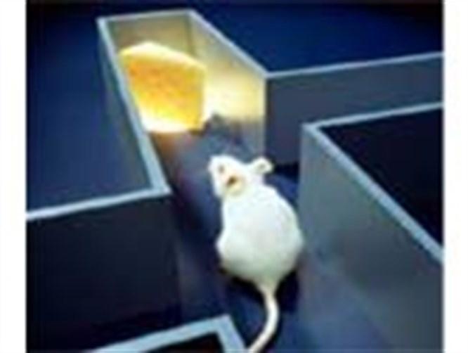 İnsan mısın fare mi!